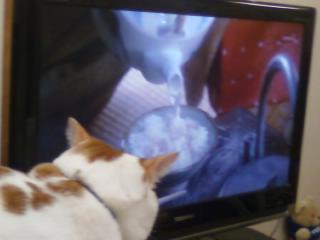 ノラ猫は大変だねぇ。ボクはあったかいおうちでテレビをみるのが好きなのです。グルメ番組が大好きなんだにゃあ。