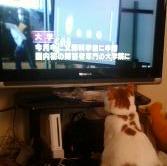機長のうちのネコはニュース番組が大好き?